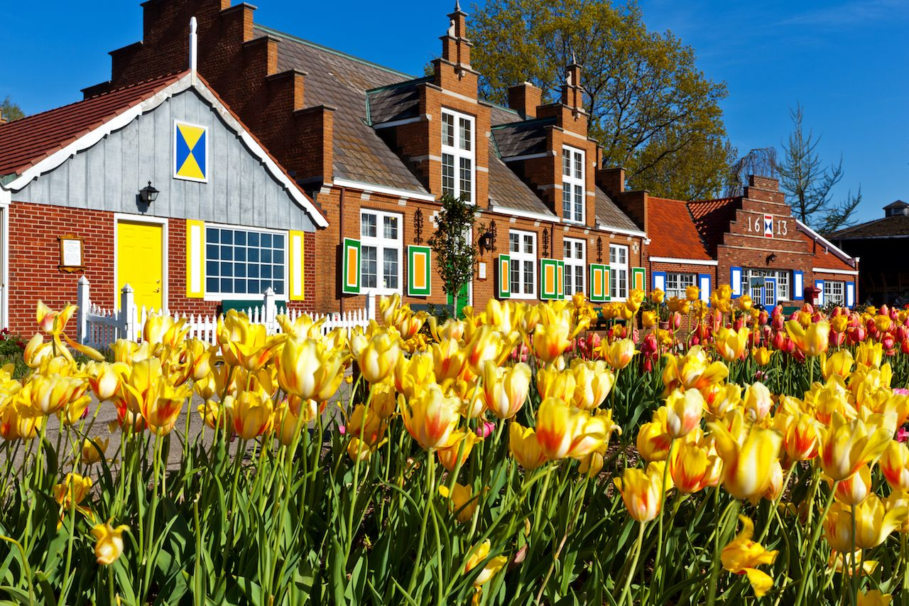 Tulips line paths at Windmill Island Villiage in Holland, Michigan