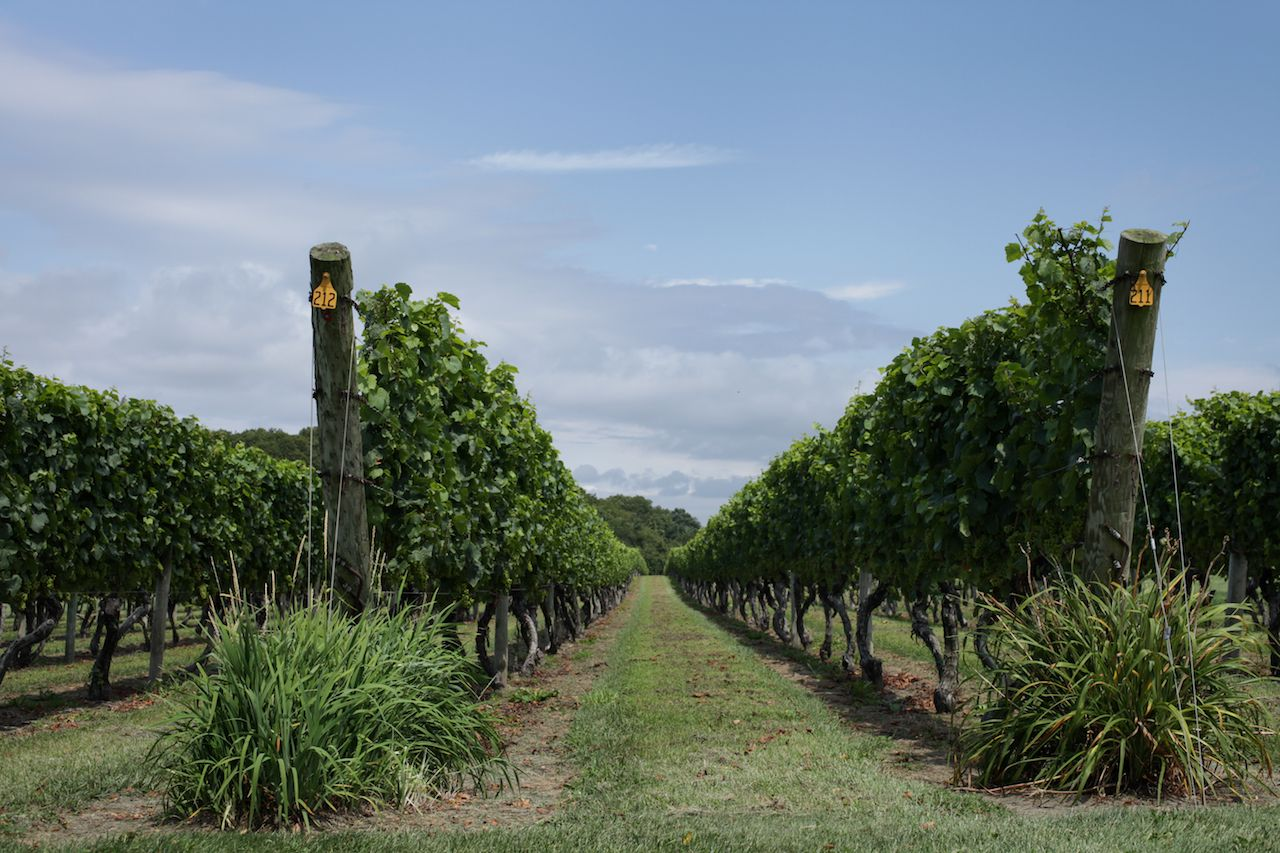 Rhode Island vineyards at one of the best wineries on the East Coast