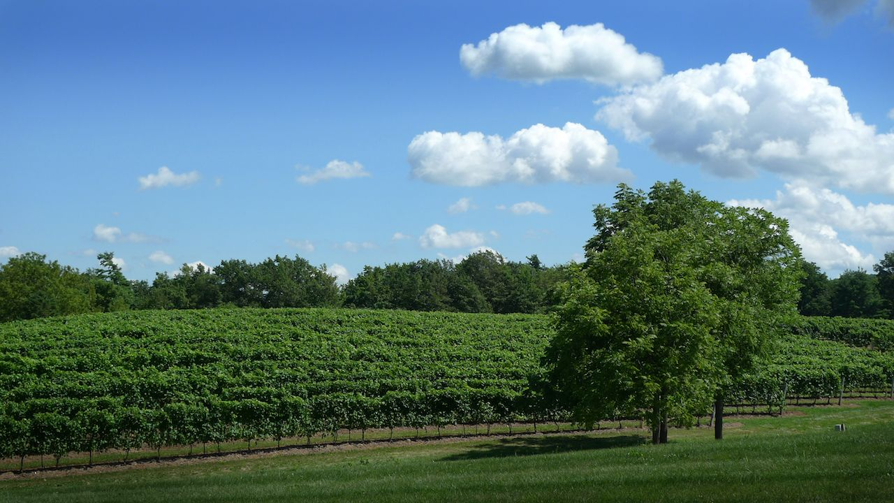 The Niagara region of Canada offers some of the best east coast winery vacations