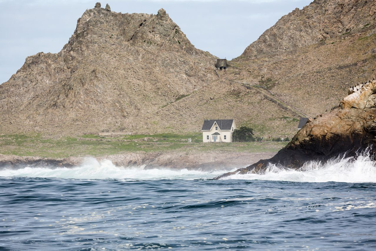 Whale watching in California at the Farallon Islands