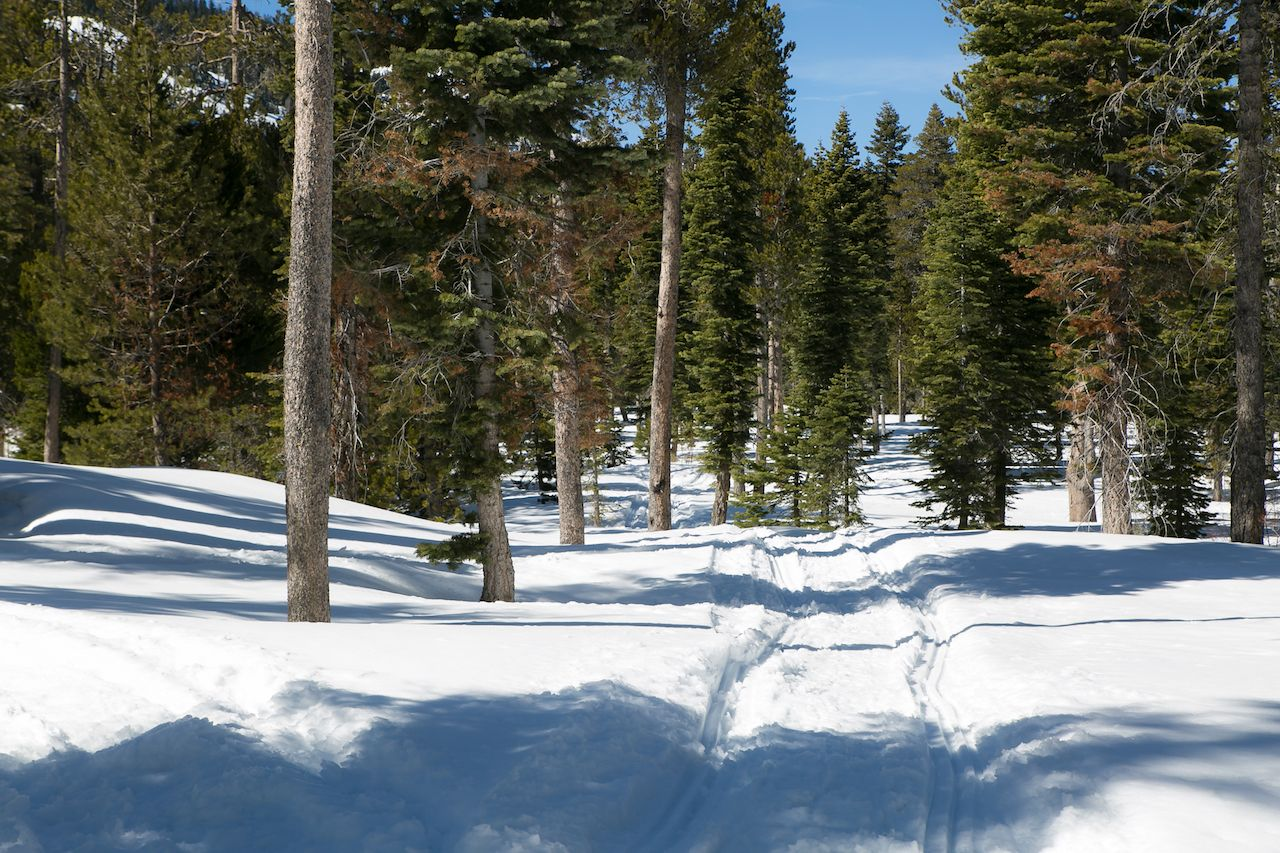 Snowshoe trails in the deep forest of Lake Tahoe