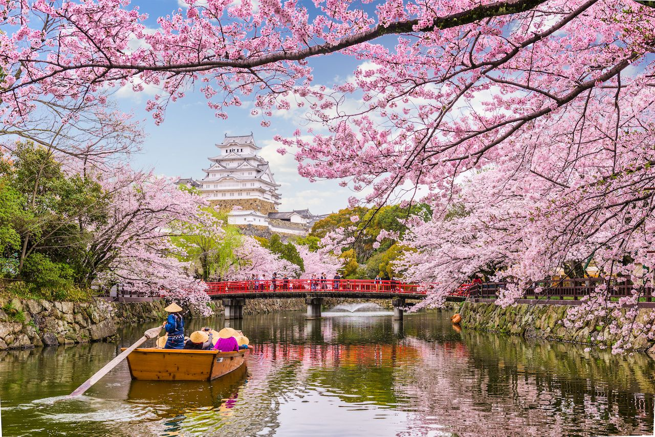 Himeji, Japan at Himeji Castle in spring season with cherry blossoms