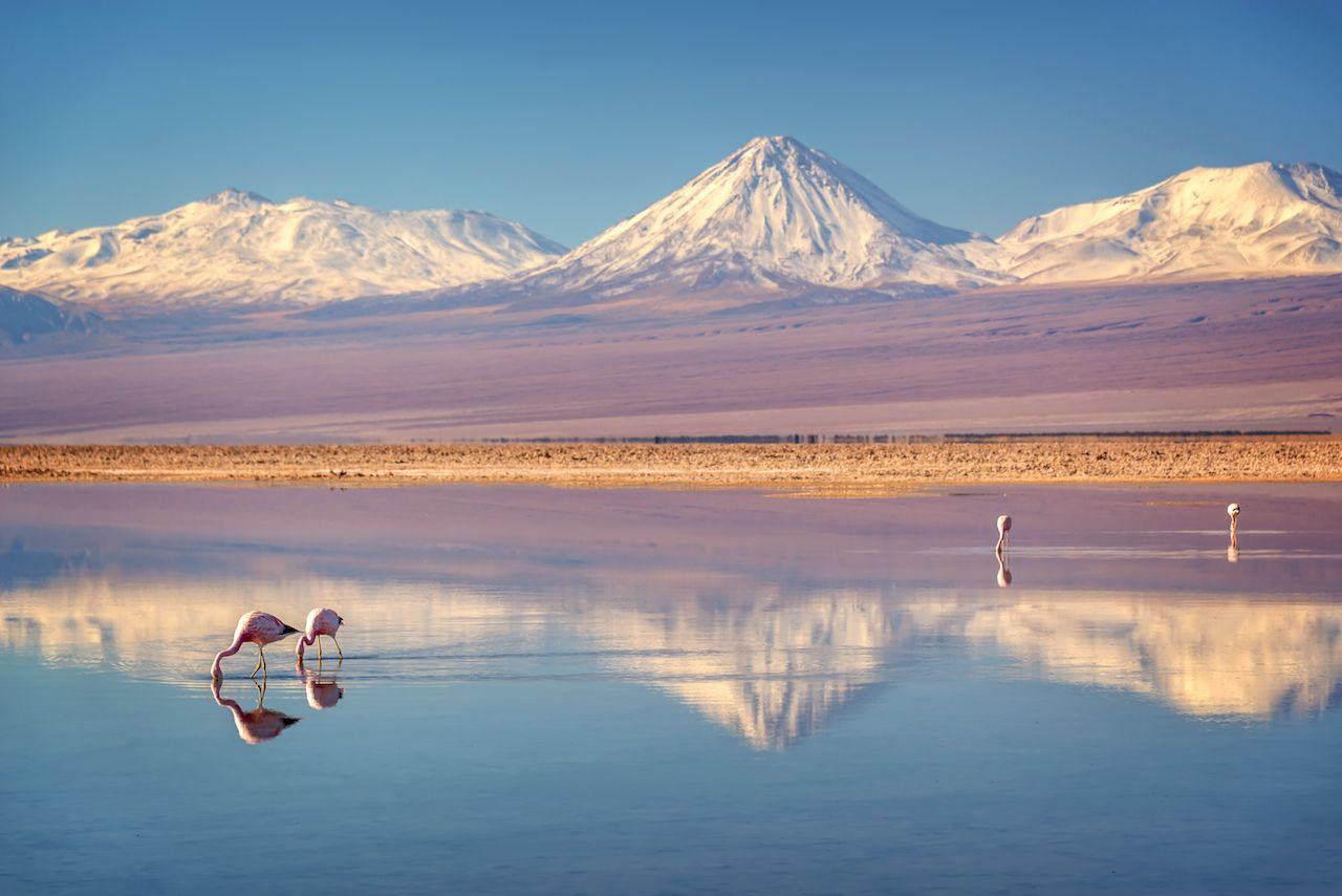 Snowy Licancabur volcano in Andes Mountains reflecting in the wate of Laguna Chaxa with Andean Flamingos, Atacama Salar, Chile