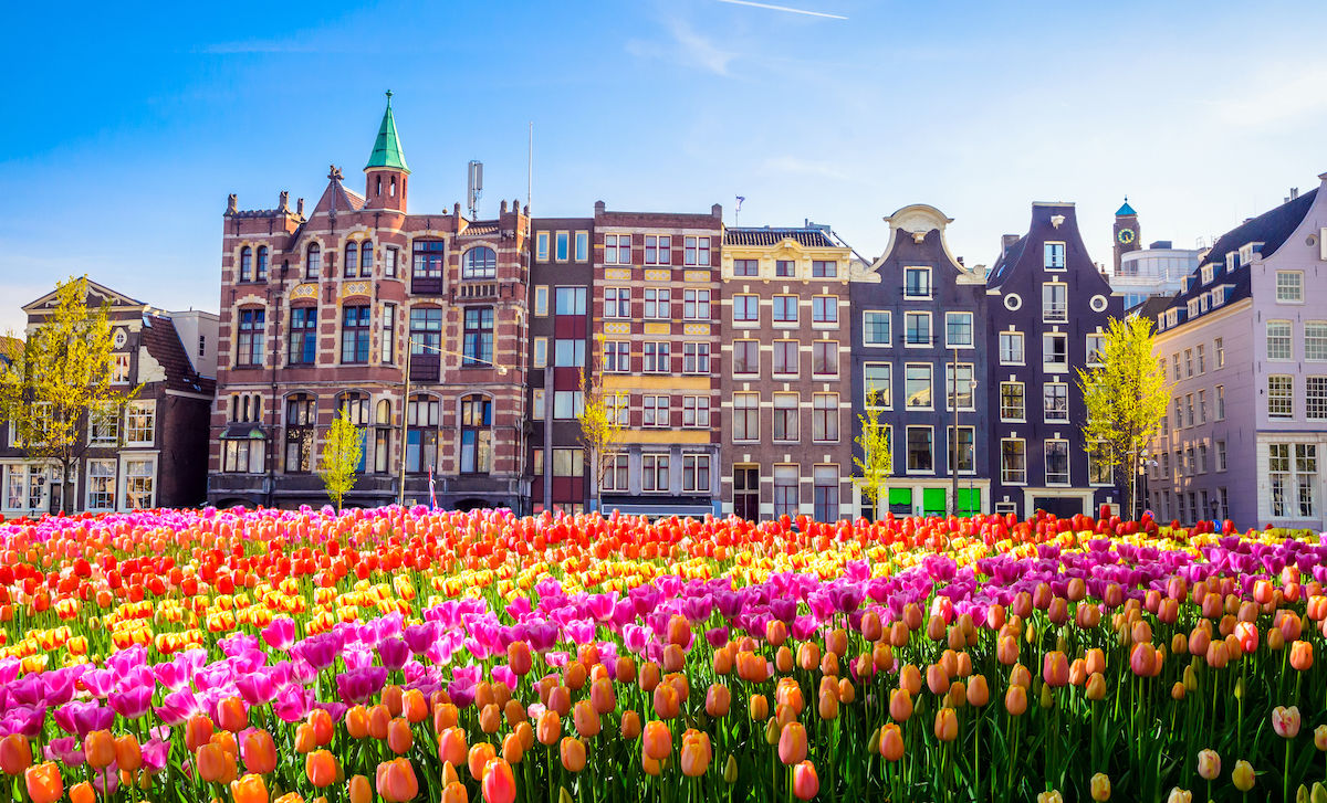 Why are tulips the symbol of the Netherlands