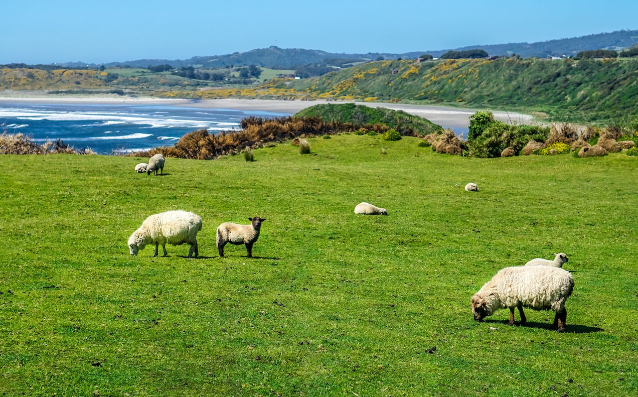 Day Trip to the Island of Chiloe