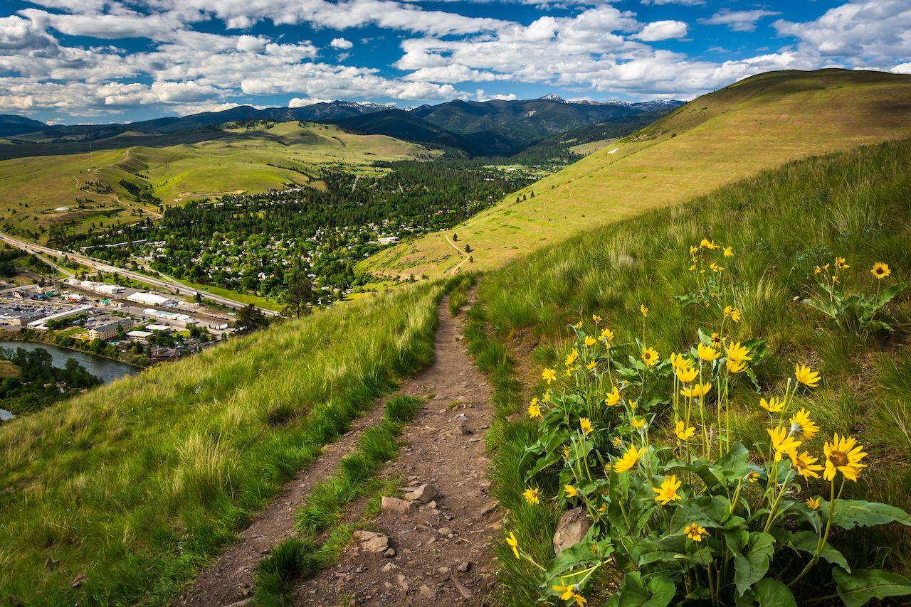 Trail and flowers on Mount Sentinel, Missoula Montana