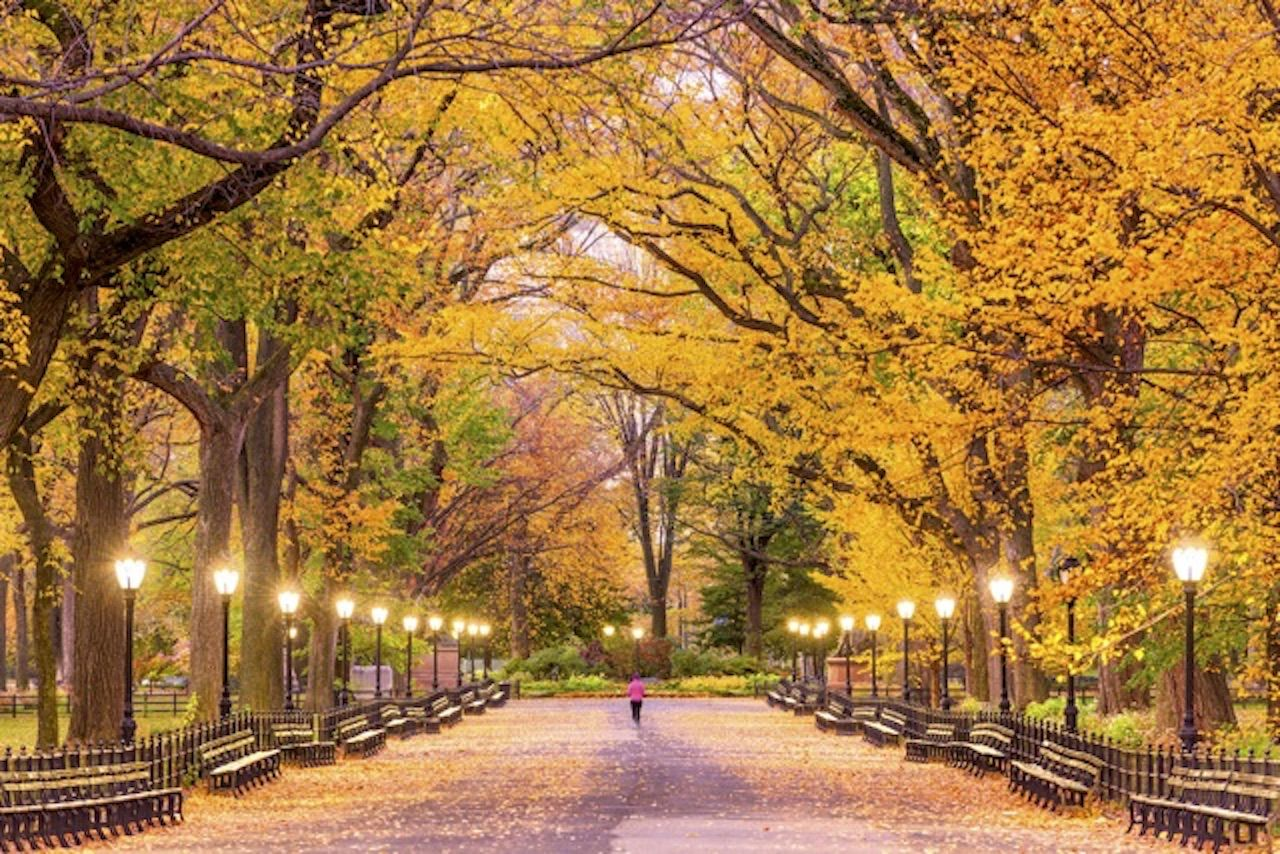 Urban parks and colorful foliage make NYC one of the best fall vacations in the US