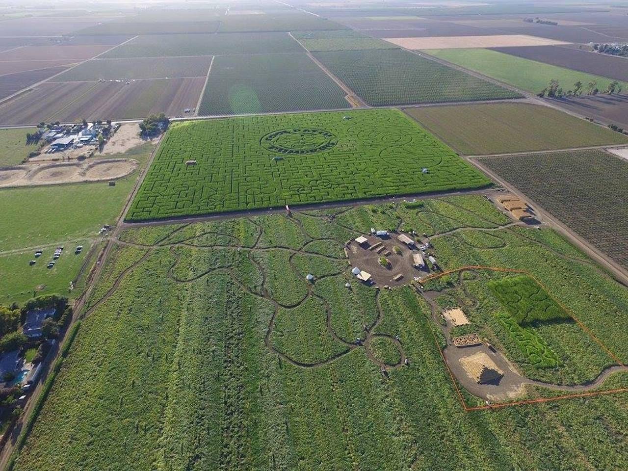 Cool Patch Pumpkins corn maze in Dixon, California