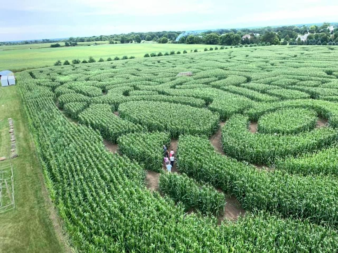 The largest corn maze in the US at Richardson Farm in Spring Grove, Illinois