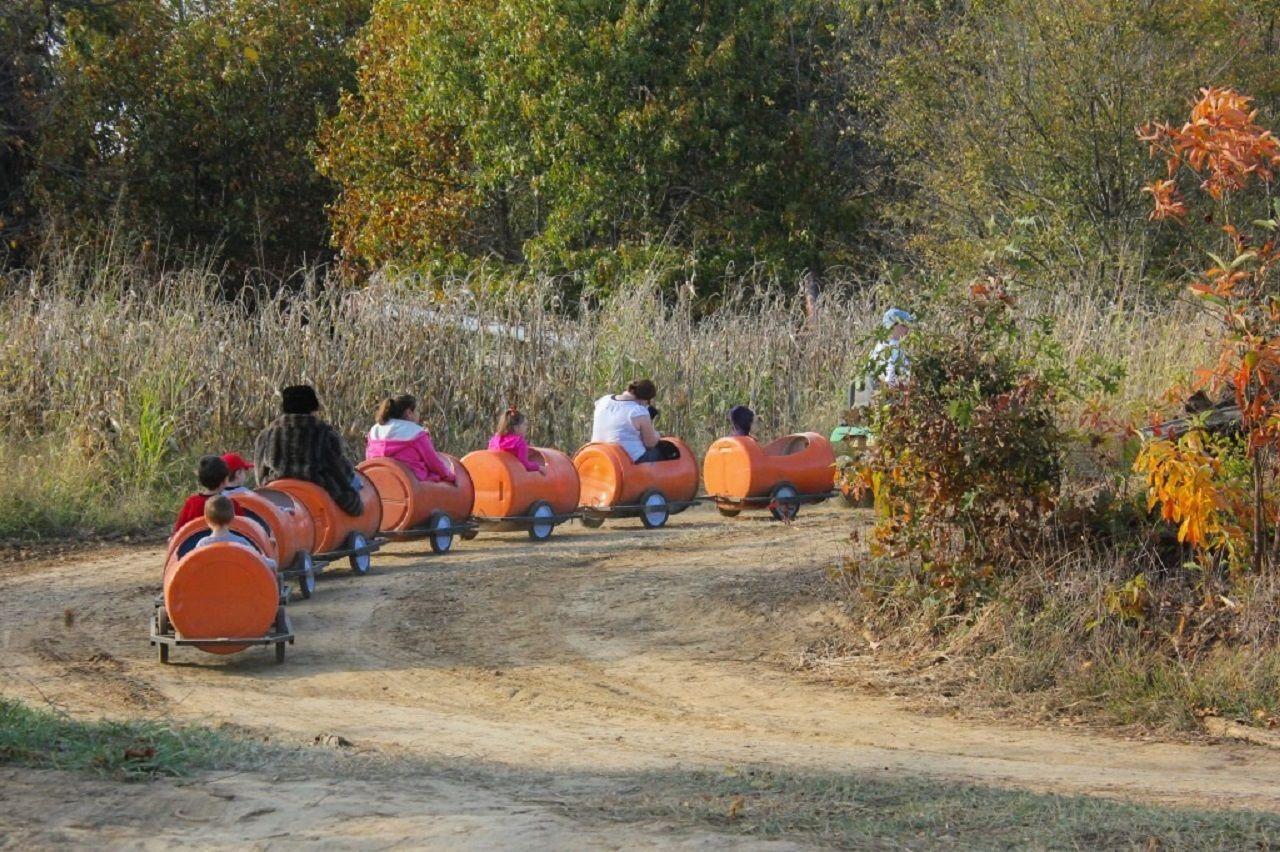 Families ride a trolley on their way to the Pumpkin Hollow pumpkin farm