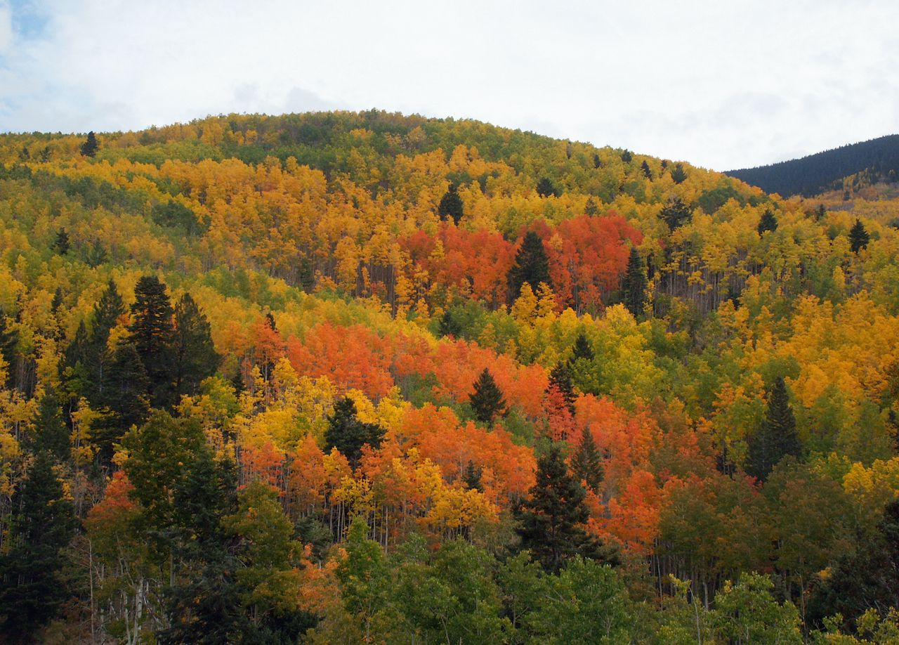 The best fall foliage in New Mexico at Taos