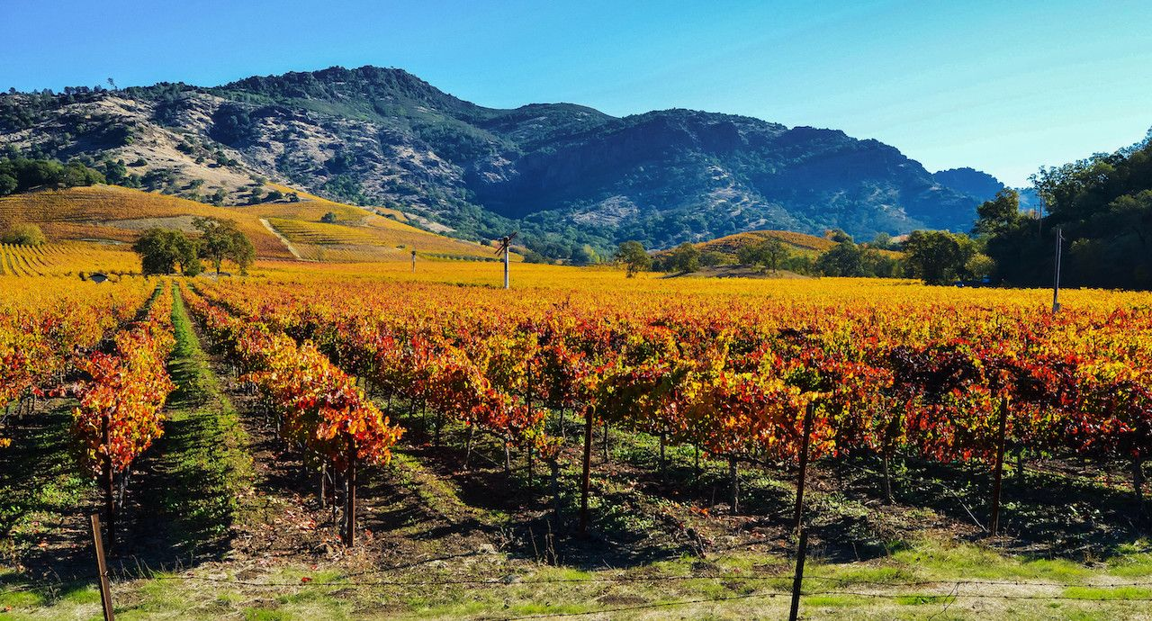 The best places to see fall foliage in Napa and Sonoma Valleys