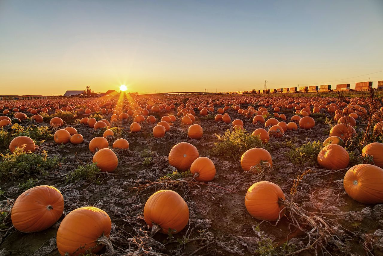 Stopping at a pumpkin patch at sunset on a fall road trip