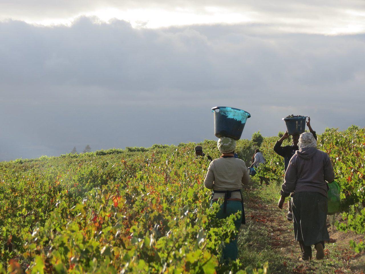 Ingrid de Waal winery