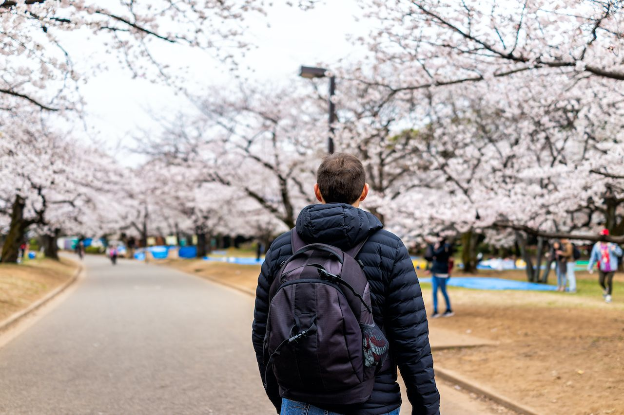 Cherry blossoms in Tokyo park
