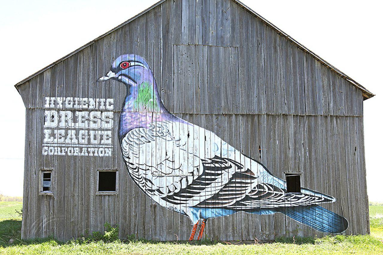 Hygienic Dress League pigeon on a barn