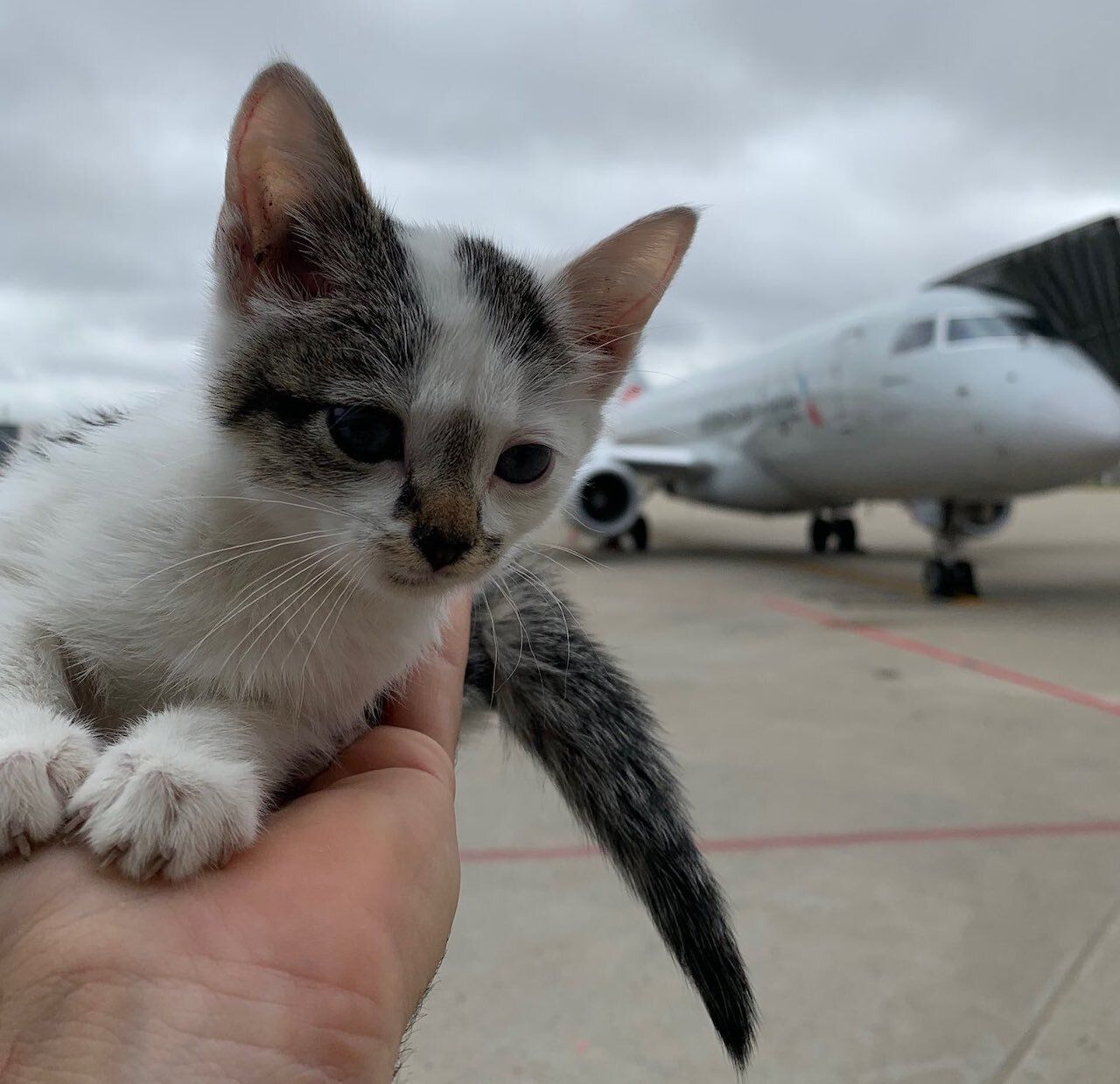 Kitten rescued at Louisville airport
