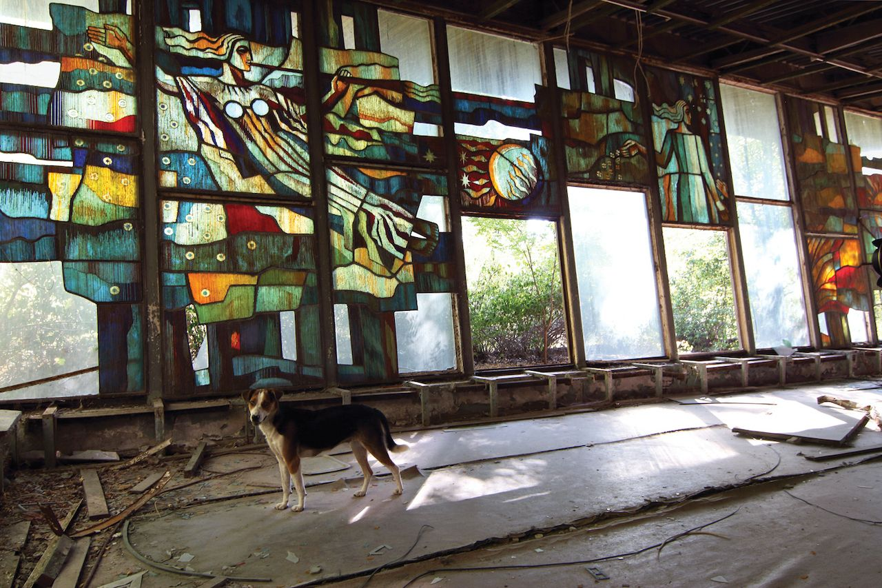 Stained glass and dog in abandoned building in Chernobyl