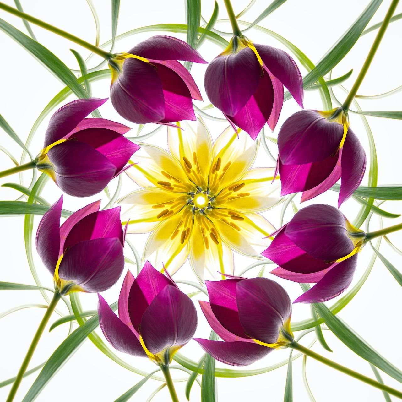 Mandala with Miniature Tulips