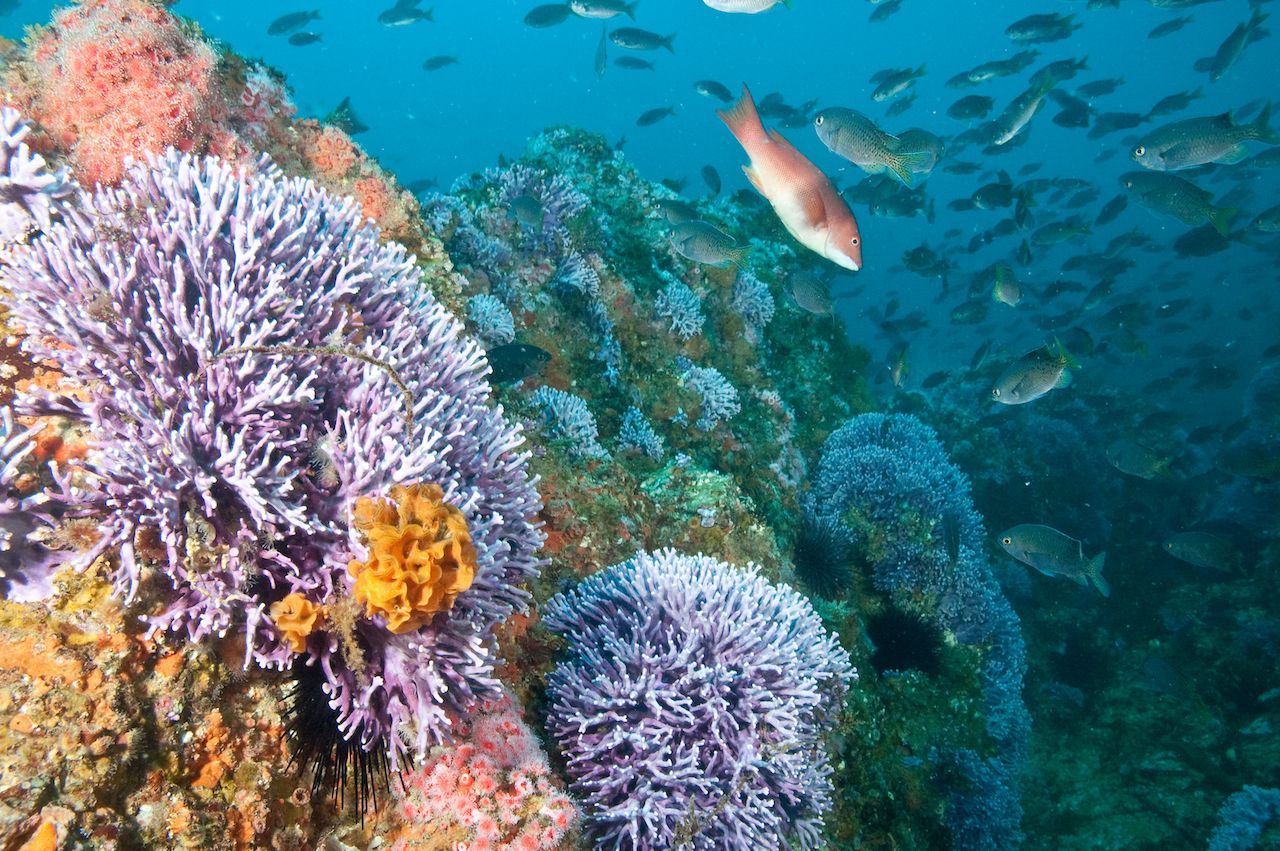 Coral reef in Catalina Island