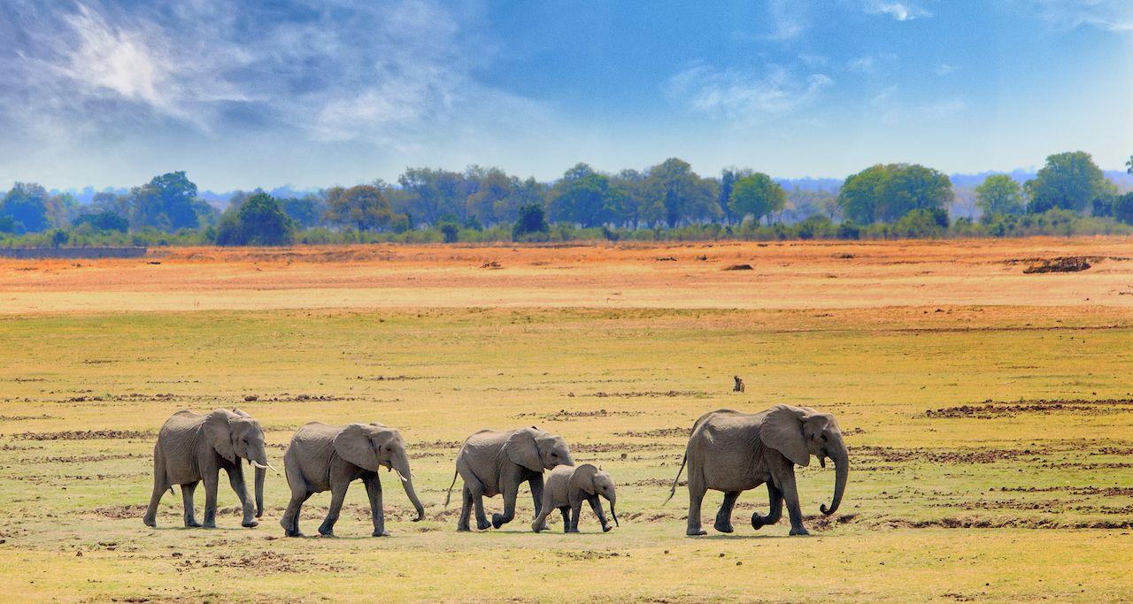 Elephants in Zimbabwe
