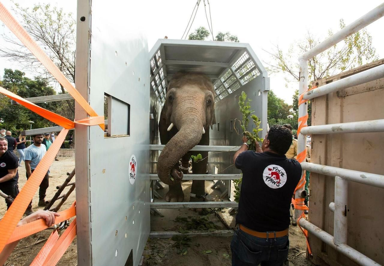 Kaavan the elephant