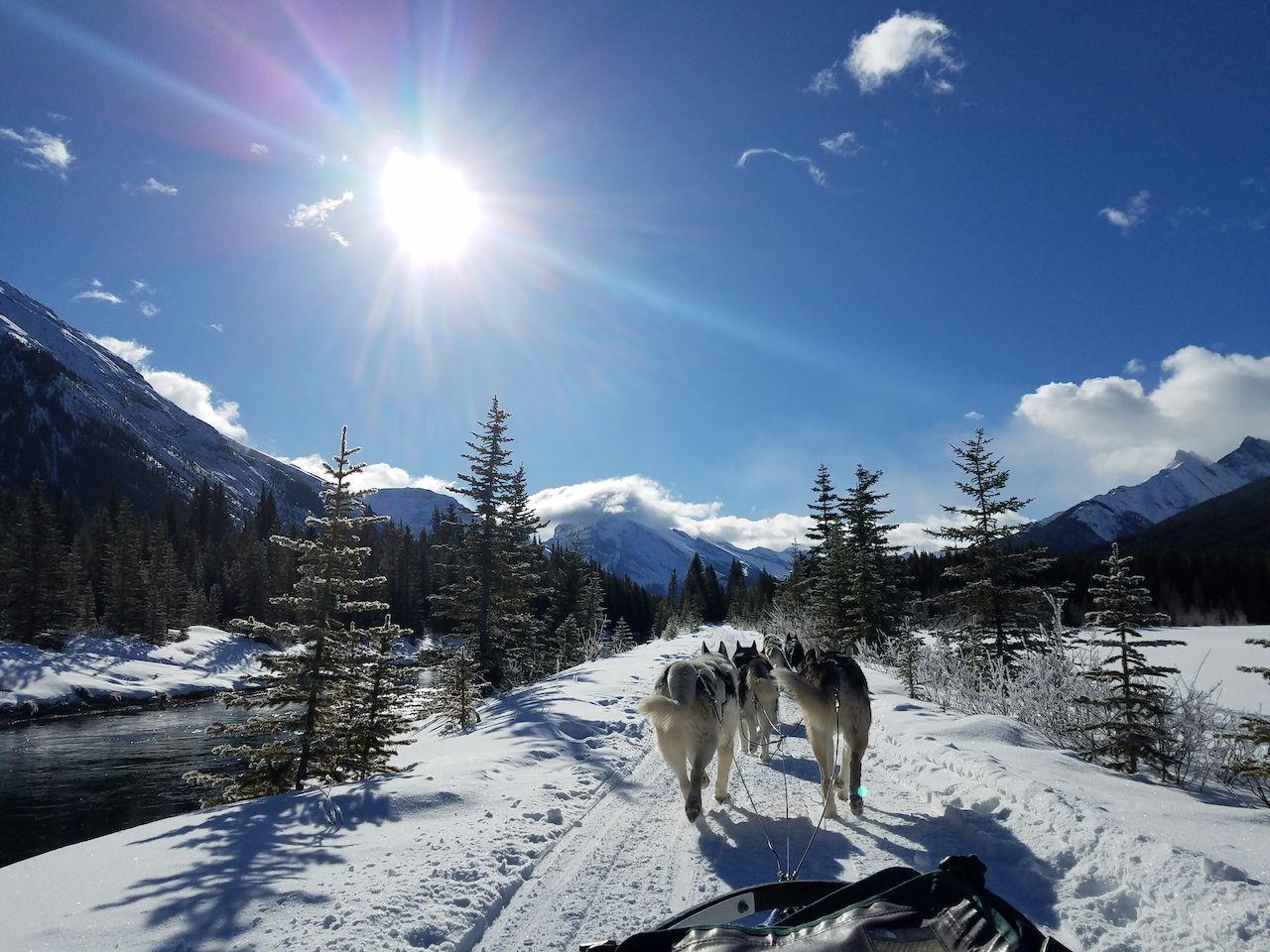 Dog sledding through the mountains in Canada
