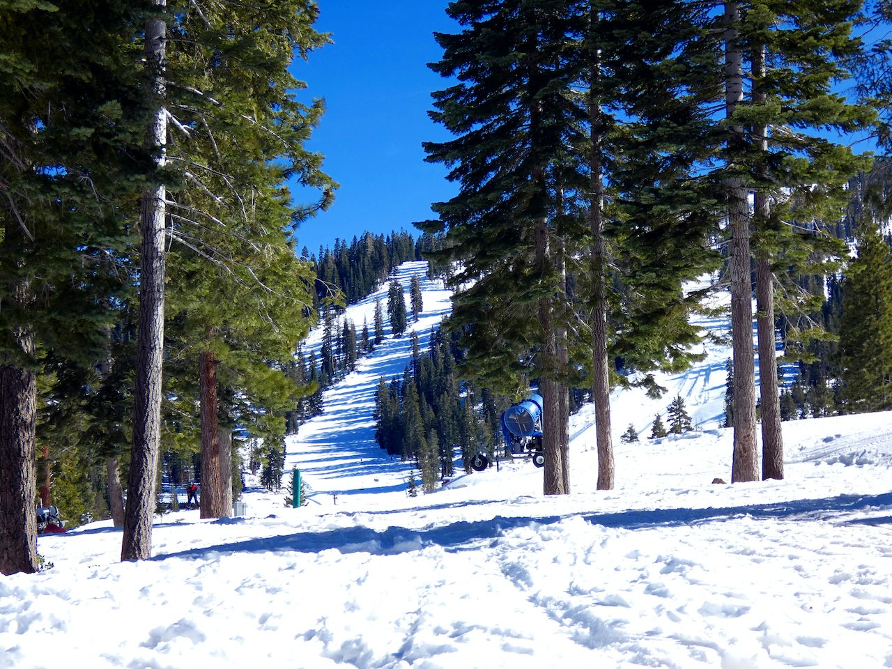 ski slopes and trees