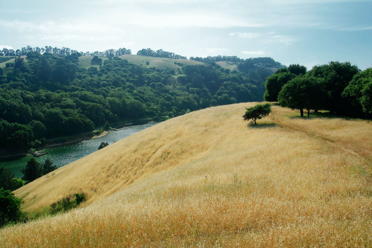 Anthony Chabot Regional Park in California