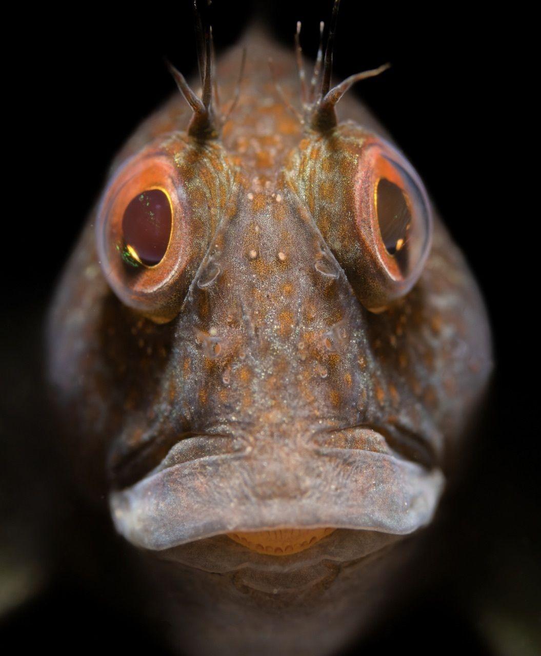 Macro view of a fish