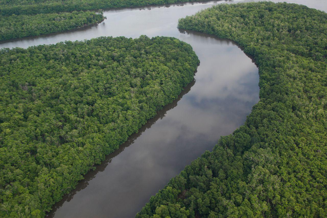 Brazilian mangrove forest