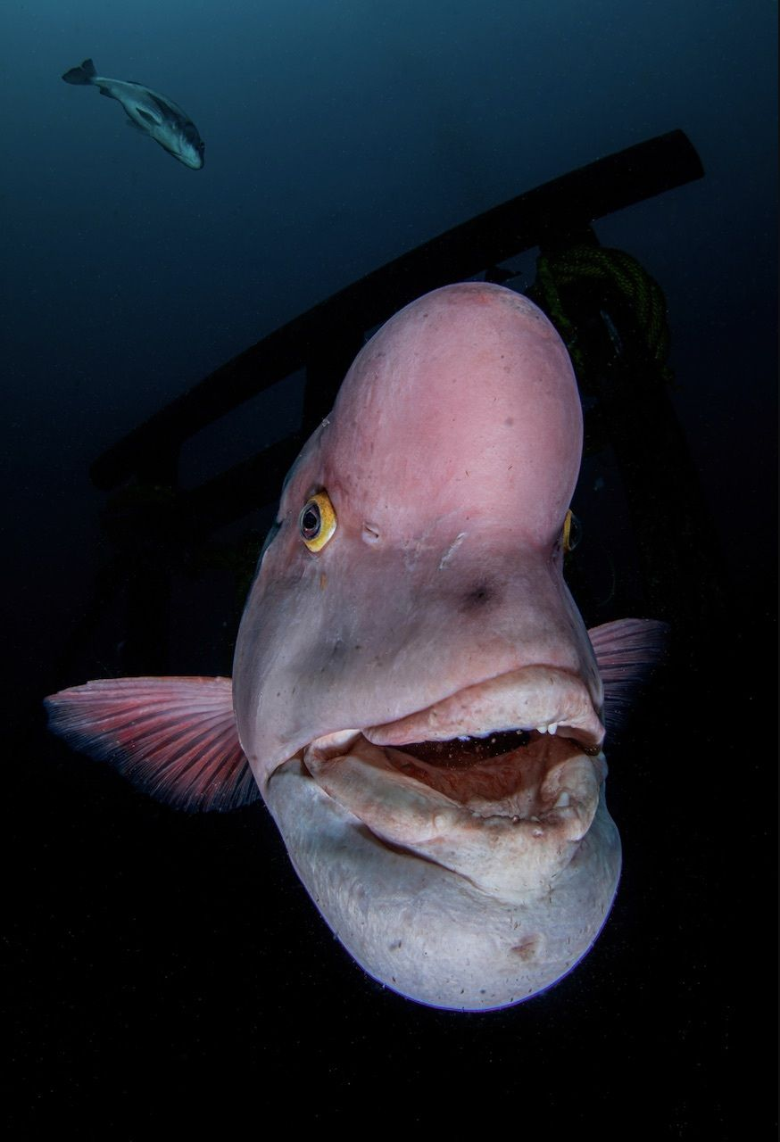 Portrait of fish Underwater Photographer of the Year