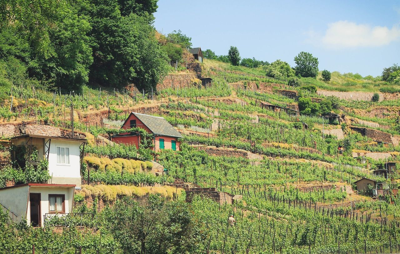 5 top wine routes in Germany