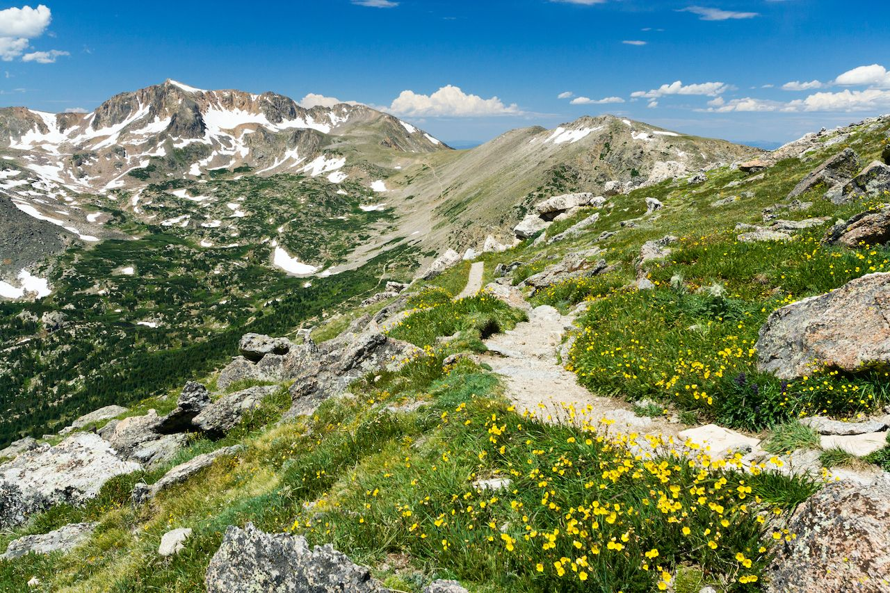 Wildflowers in Colorado mountains, national scenic trail