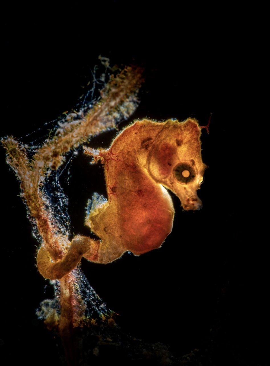 macro Underwater Photographer of the Year