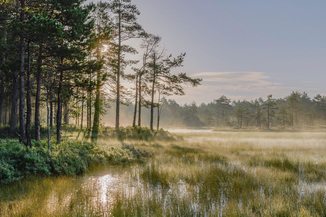 Misty bog landscape with rising sun