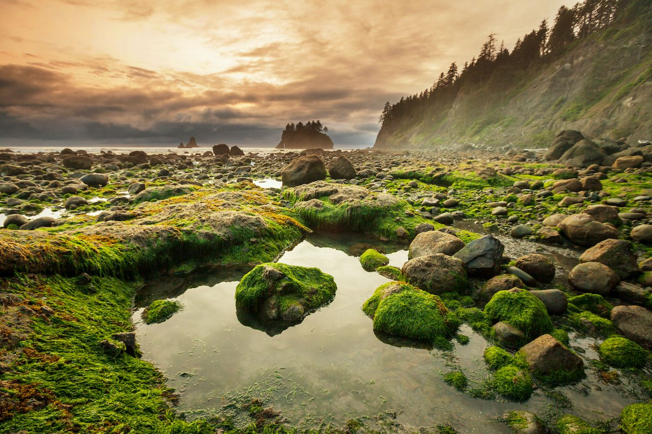 Olympic National Park, most visited national parks in 2020