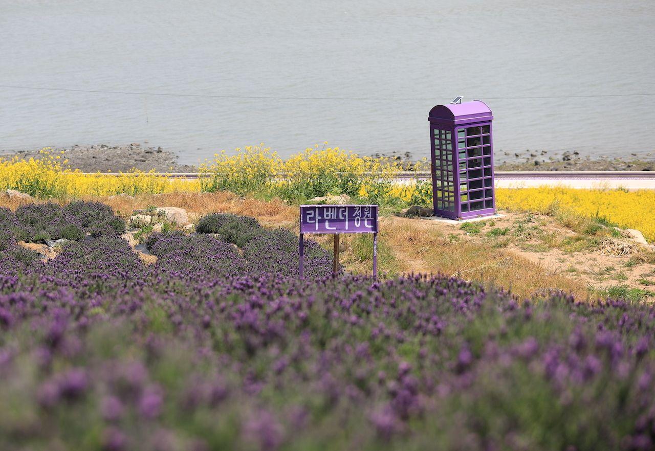 Purple flowers and purple mailbox on the Purple Islands of South Korea