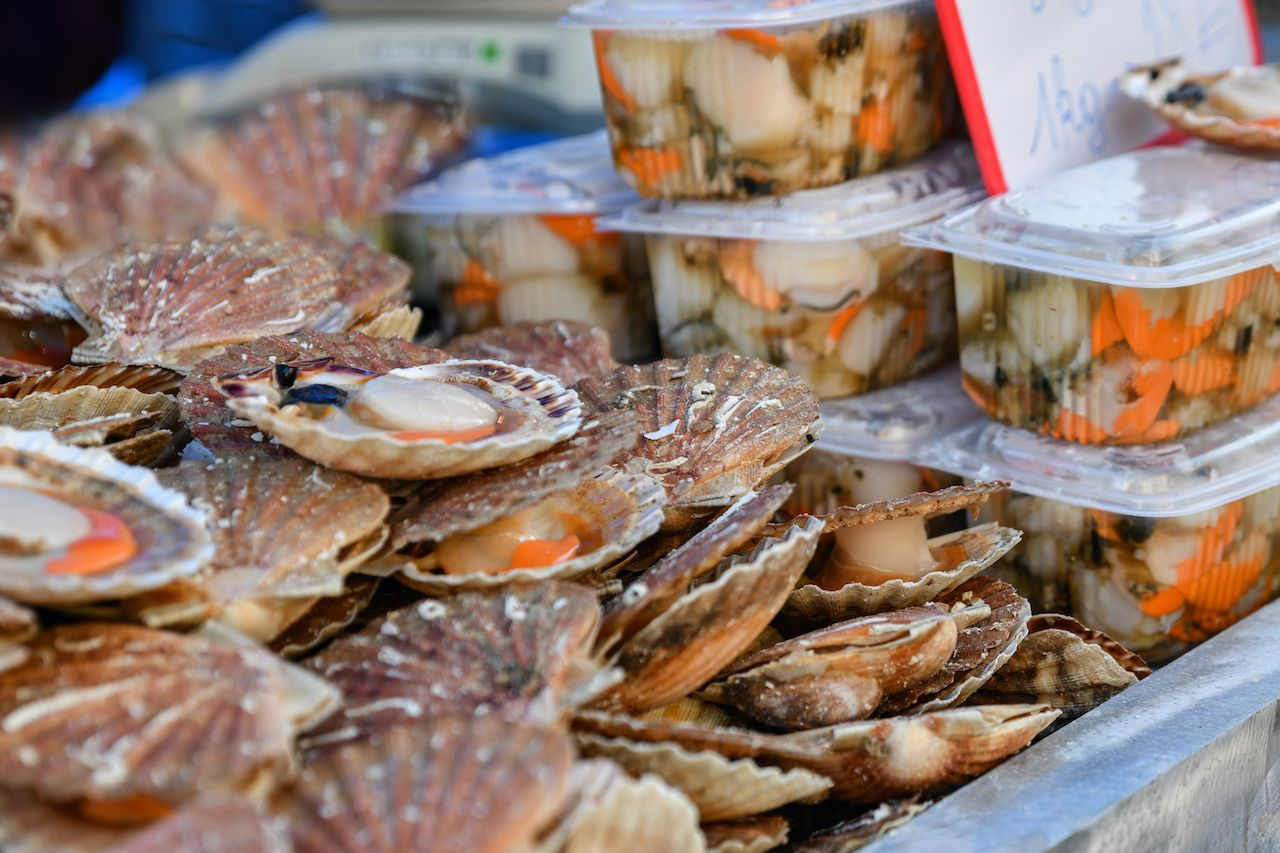 Scallops, regional food France