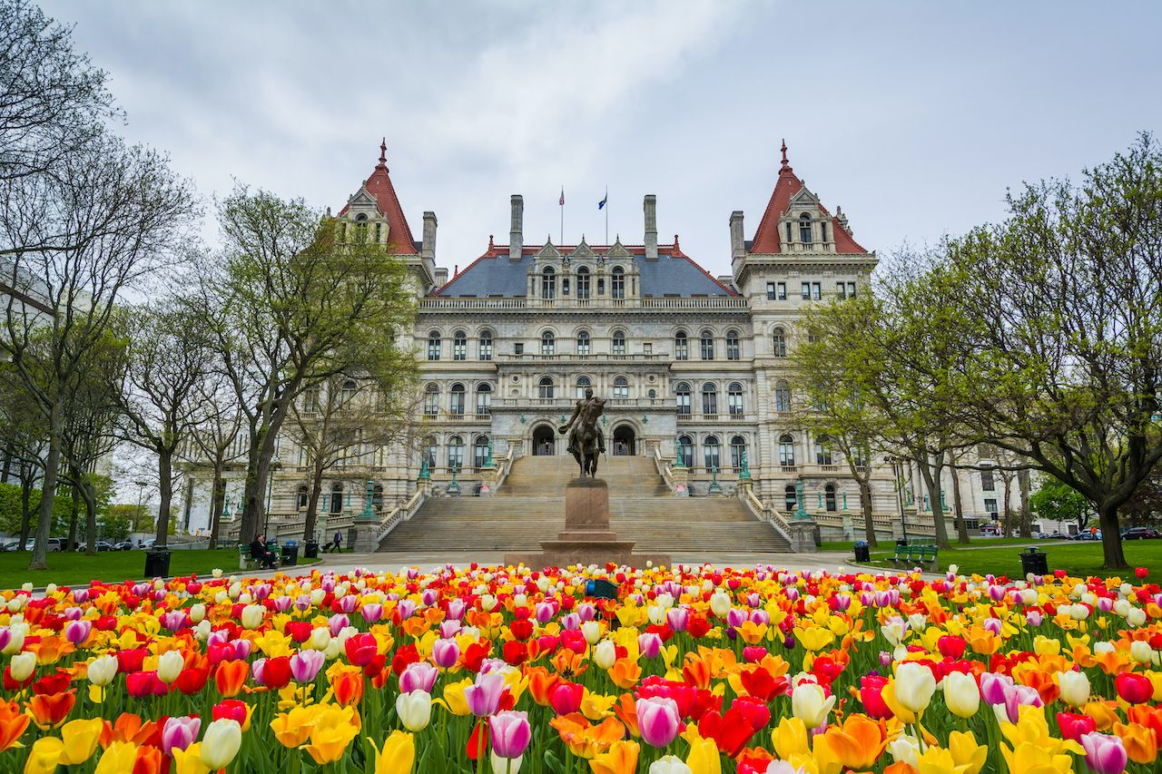 Tulips and The New York State Capitol