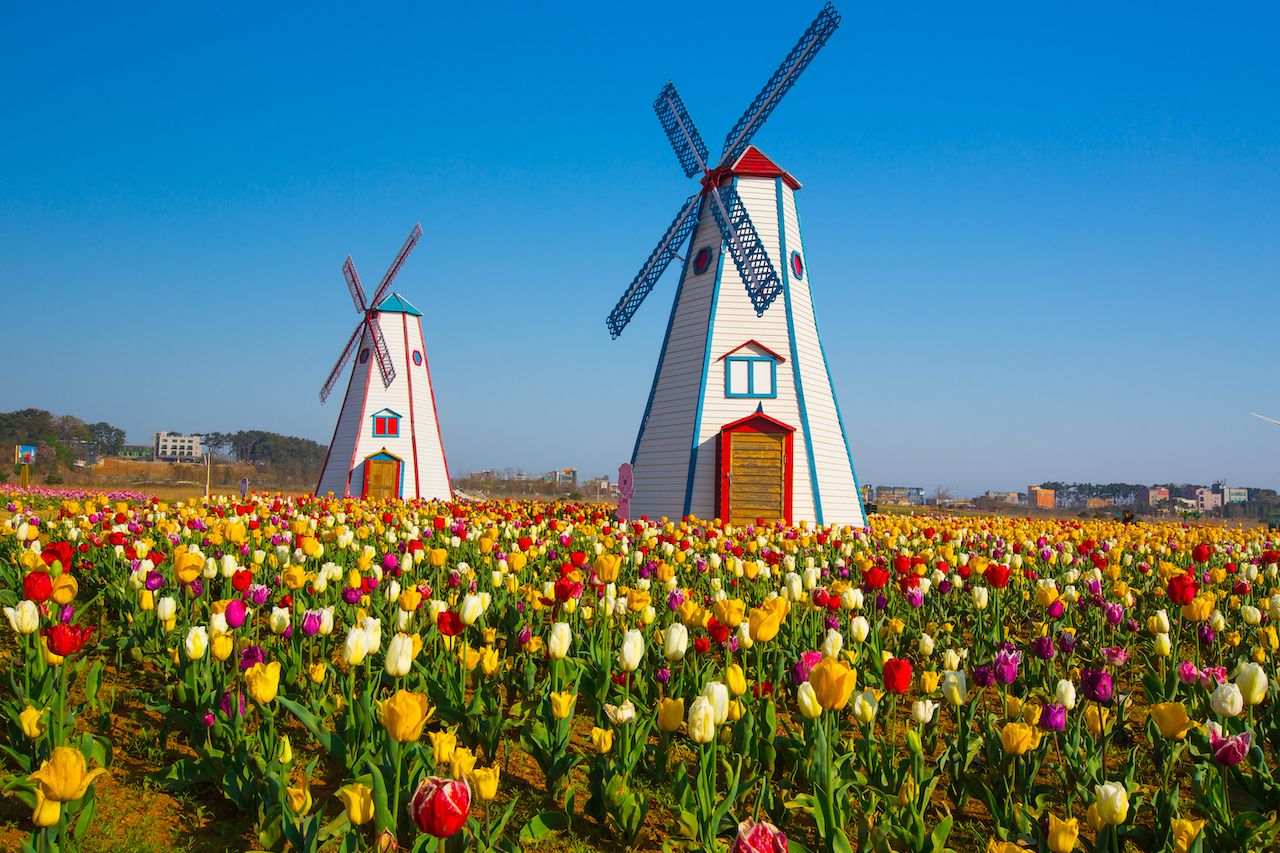 windmill and tulips, King's Day in Dutch culture
