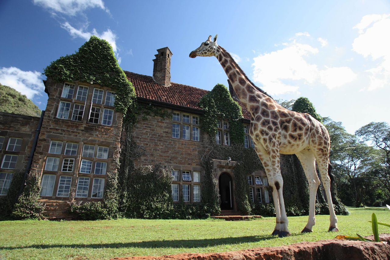 giraffe buddy next to giraffe manor, giraffe manor