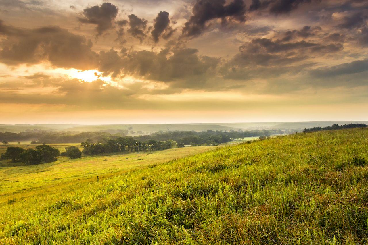 Kansas Tallgrass