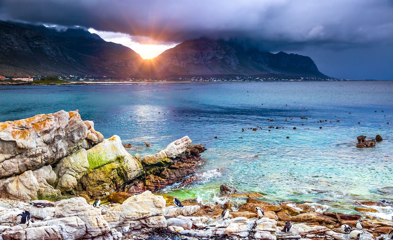 Amazing view of Betty's Bay in sunset light, many wild penguins on the rocky coast, Scenic spots Cape Town