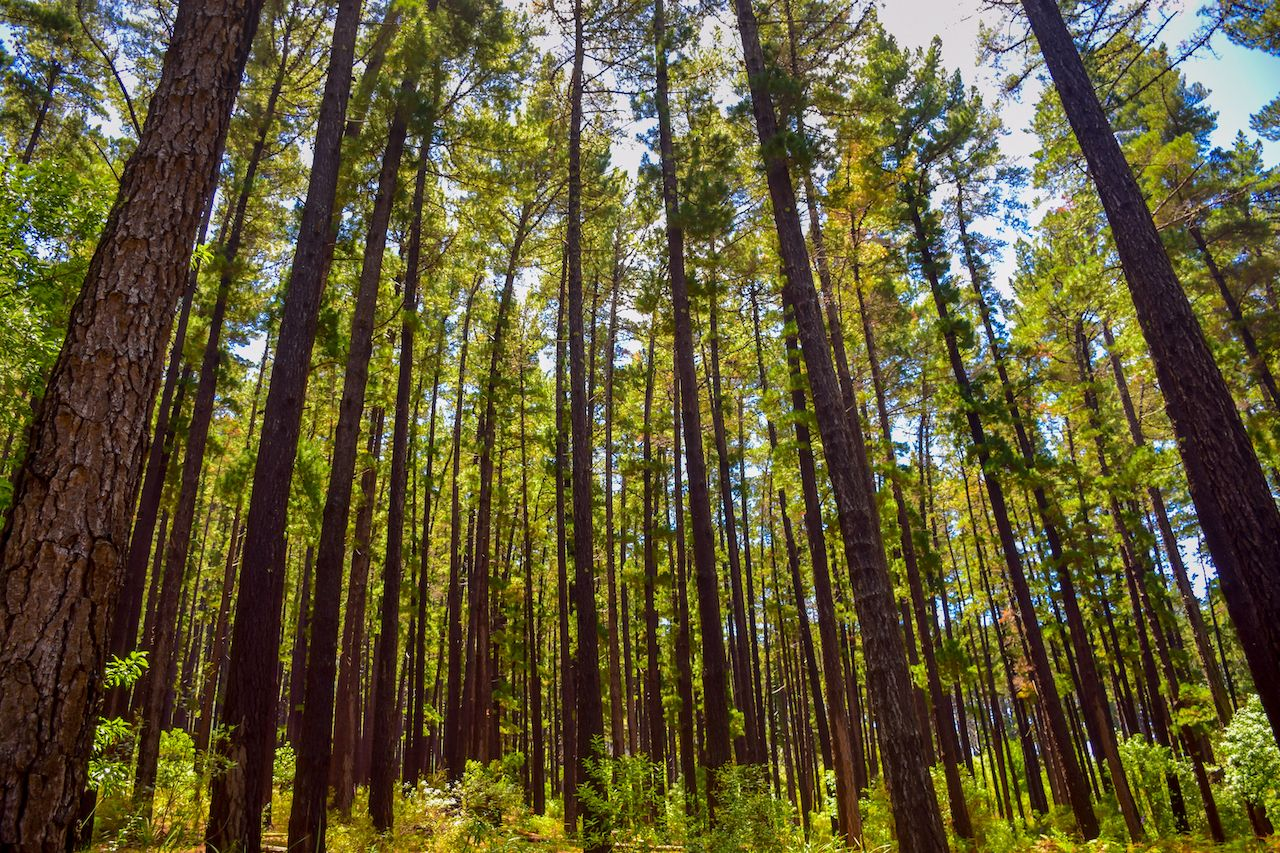 Newlands Forest, scenic views in Cape Town