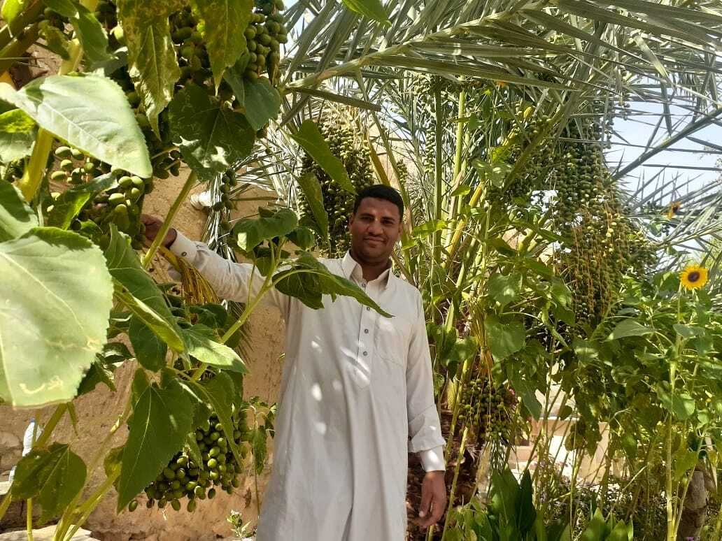 Africa's largest exporter of date syrup, Siwa Oasis, Egypt