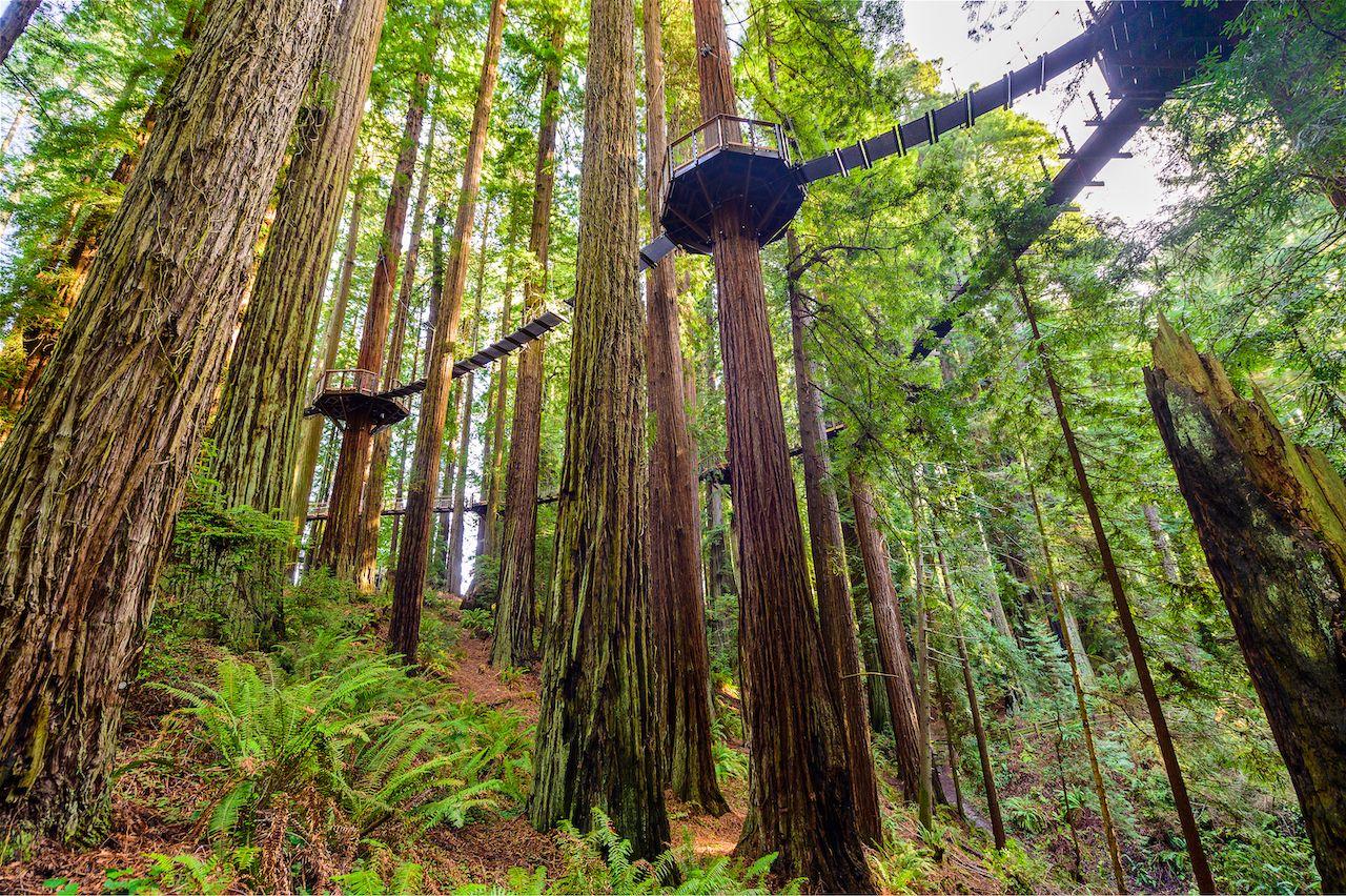 Redwood Sky Walk in Sequoia Park Zoo, California