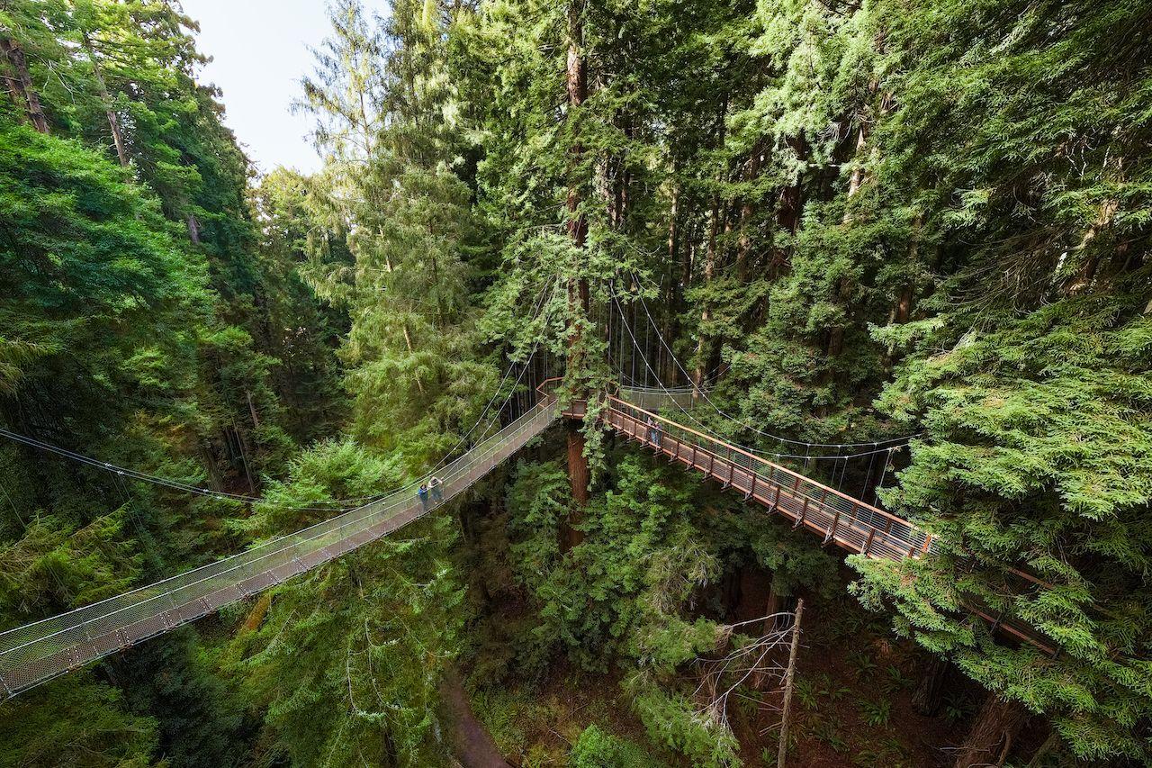 Redwood Sky Walk in Sequoia Park Zoo in Eureka