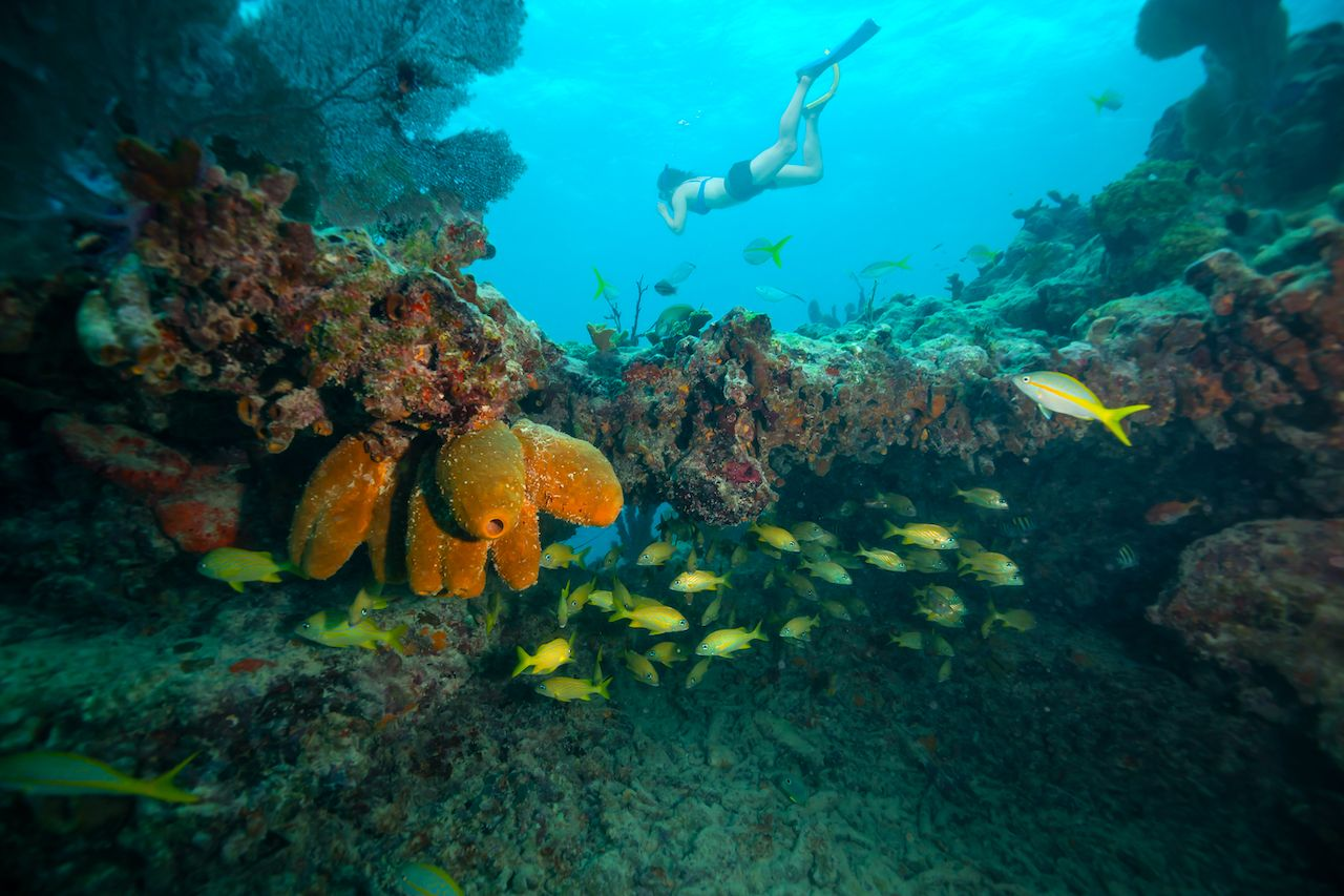 Adventurous,Girl,Snorkeling,In,The,Ocean,Coral,Reef.,Located,Near