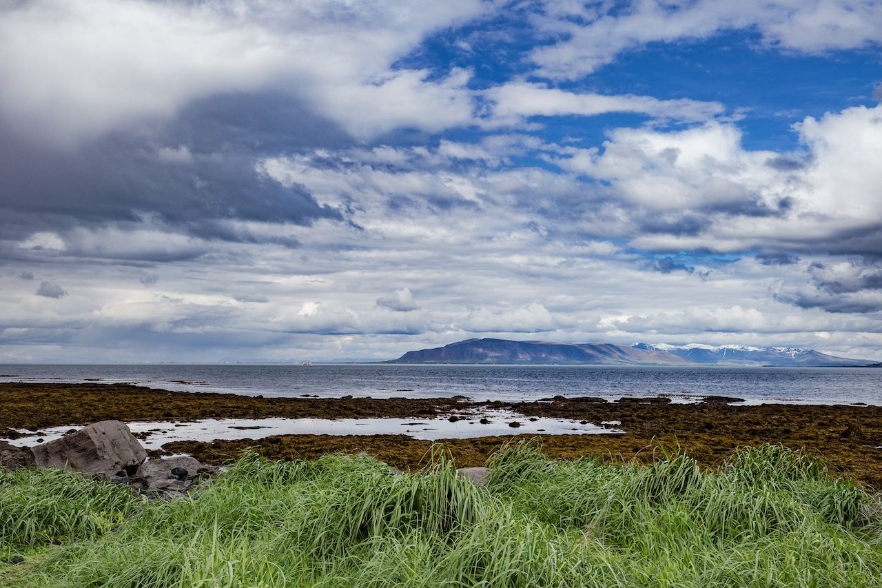 Rich green grass on a beach on Seltjarnarnes peninsula near Reykjavik, Iceland, during a stormy summer day, What to do in Reykjavik,